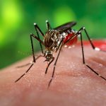 http://cdn.sci-news.com/images/enlarge3/image_4056e-Aedes-aegypti.jpg