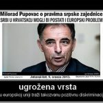 http://www.hazud.ch/wp-content/uploads/2013/08/Pupovac.jpg