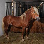 http://www.lazyhorse.ba/konji/Niki-ranc-za-konje-lazy-horse.jpg
