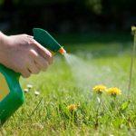 http://yardcare.toro.com/wp-content/uploads/2010/11/herbicides.jpg