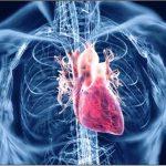 http://mjeksiaislame.com/wp-content/uploads/2013/05/agjerimi-sistemi-kardiovoskular.jpg