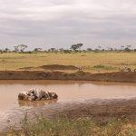 http://footage.framepool.com/shotimg/qf/585332069-water-place-landing-flying-savannah-kenya.jpg