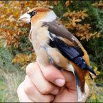 http://ozonpress.net/wp-content/uploads/2015/11/ornitolozi-5.jpg