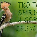 http://blog.dnevnik.hr/babl/slike/originals/000pupovac.jpg