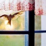 https://www.absolutebirdcontrol.com/media/wysiwyg/product-by-area/350xNxbird-hits-window.jpg.pagespeed.ic.pwkXDZDWE6.jpg