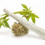 https://img3.stockfresh.com/files/l/luiscar/m/45/2166267_stock-photo-hemp-cannabis.jpg