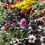 https://i1.wp.com/countrygardenuk.com/wp-content/uploads/2017/10/happiness-garden.jpg?resize=700%2C467&ssl=1