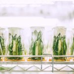 Slikovni rezultat za Parallelism of biological processes in organisms