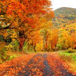 https://hips.hearstapps.com/hmg-prod.s3.amazonaws.com/images/autumn-in-the-pioneer-valley-region-of-royalty-free-image-487506928-1567078392.jpg?crop=0.668xw:1.00xh;0.191xw,0.00240xh&resize=640:*