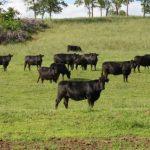 Slikovni rezultat za Russia - cow farm