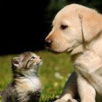 https://images.wallpaperscraft.com/image/dog_cat_kitten_puppy_grass_65389_225x300.jpg