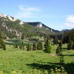 Slikovni rezultat za forest croatia