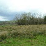 https://upload.wikimedia.org/wikipedia/commons/5/54/Neglected_Land_-_geograph.org.uk_-_765526.jpg
