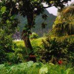 https://upload.wikimedia.org/wikipedia/commons/b/bc/Rainforest_Fatu_Hiva.jpg